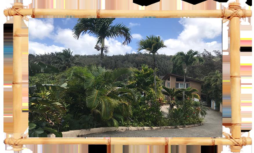 Conny Island  Hawaii